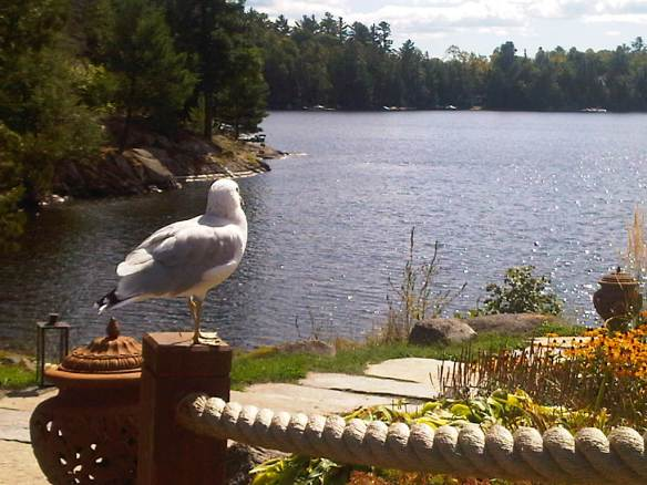 Blog Photo - HG photo of seagull and lake