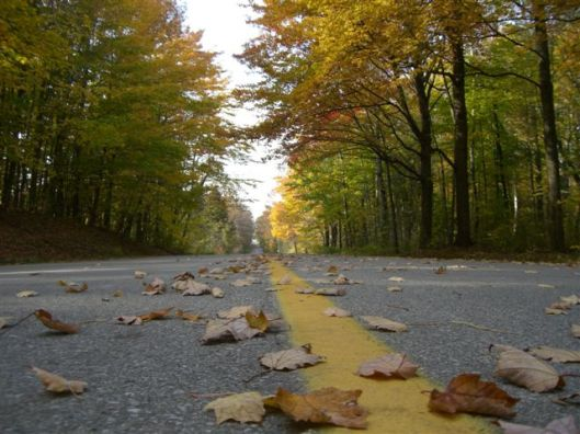 Blog Photo - Autumn trees 3