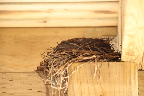 Blog Photo - Robin's nest