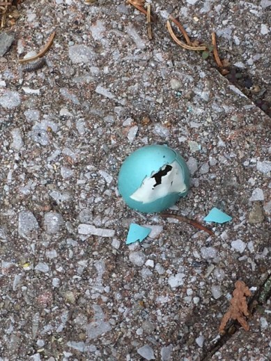 Blog Photo - Spring 2018 Robin Egg