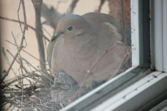 Blog Photo - Dove Baby under Parent