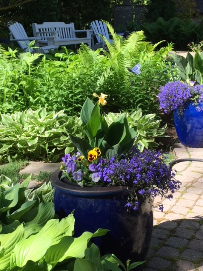 Blog Photo - Garden Blue pots CU