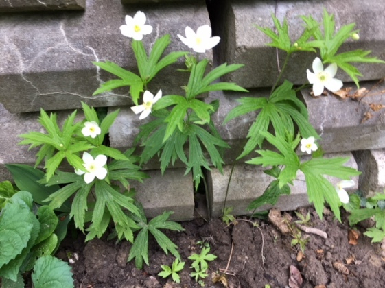 Blog Photo - Garden Whtie flowers against wall