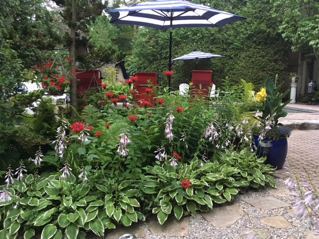 Blog Photo - Garden and open umbrella and plants