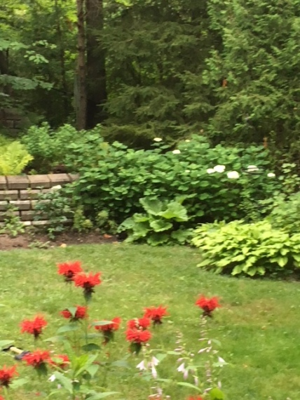 Blog Photo - Garden beauty shot July 2018 - corner of back garden shows bee balm and trees