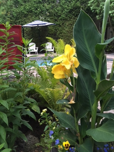 Blog Photo - Garden Beauty shot July 2018 -- view from yellow lilies in blue pots to white chairs across pool