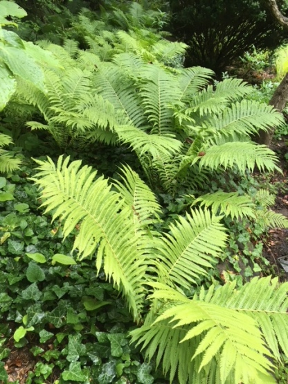 Blog Photo - Garden Ferns Closer
