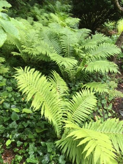 Blog Photo - Garden Ferns Closer