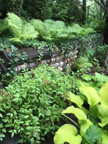 Blog Photo - Garden Ferns over wall 2