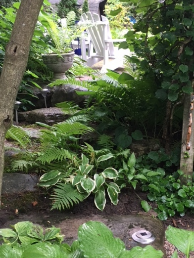 Blog Photo - Garden Hosta and Chairs seen from path