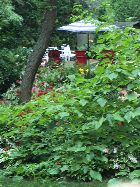 Blog Photo - Garden Leaning tree and umbrella and blooms