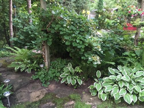 Blog Photo - Garden Path and Hosta