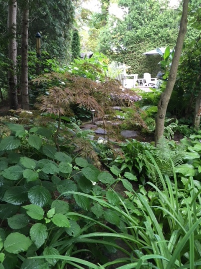 Blog Photo - Garden woodland and hydrangea and japanese maple