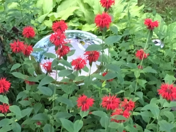Blog Photo - Red Bee Balm and Bird Bath
