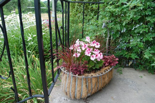 Blog Photo - Carol garden beautiful potted arrangement on front patio