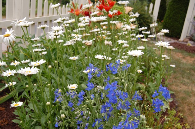 Blog Photo - Carol garden daisies etc