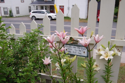 Blog Photo - Carol garden pink lilies and sign about flowers