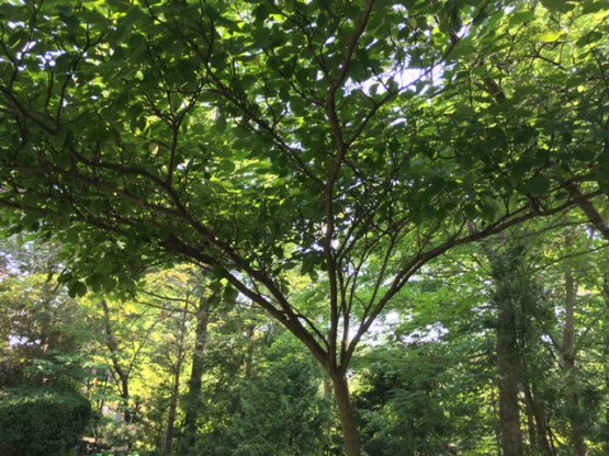 Blog Photo - Garden August 2018 - Under the Dogwood tree