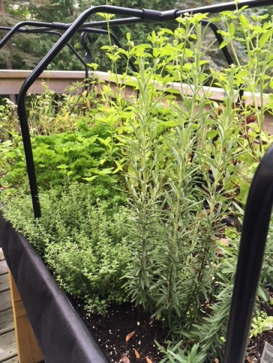 Blog Photo - Garden Sept 2018 Herb Bed.JPG