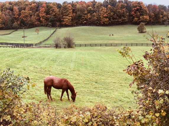 Blog Photo - Autumn Countryside Horses in field