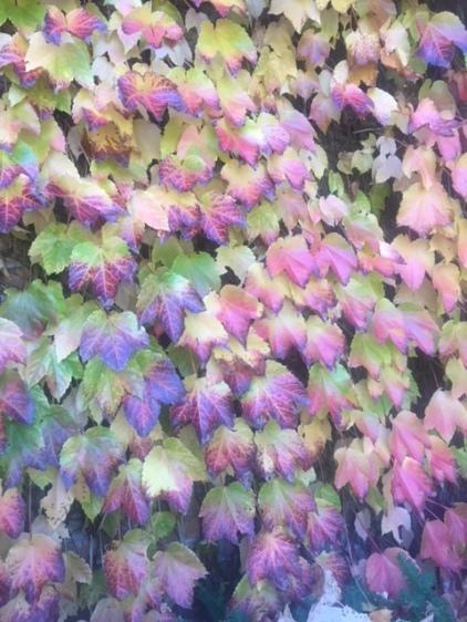Blog Photo - Autumn Leaves CU