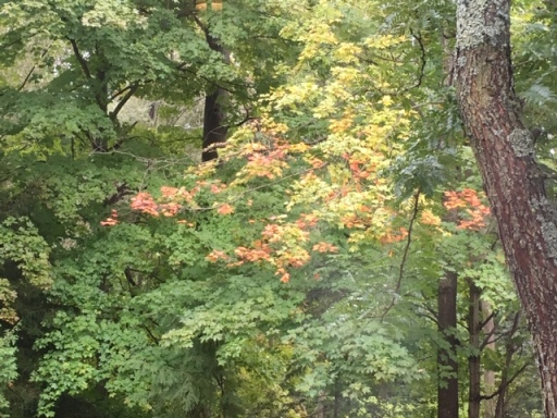 Blog Photo - Autumn Leaves Early