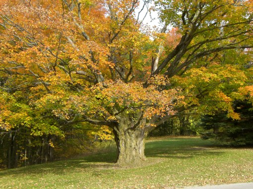 Blog Photo - Autumn Trees 2