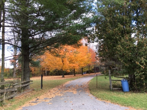 Blog Photo - Autumn trees and Driveway