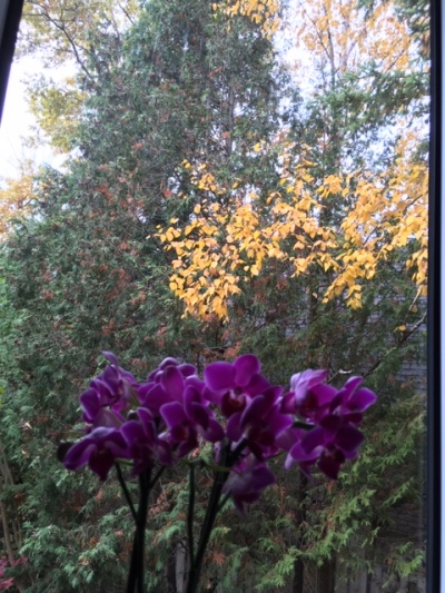 Blog Photo - autumn woods birch leaves outside, orchid on windowsill