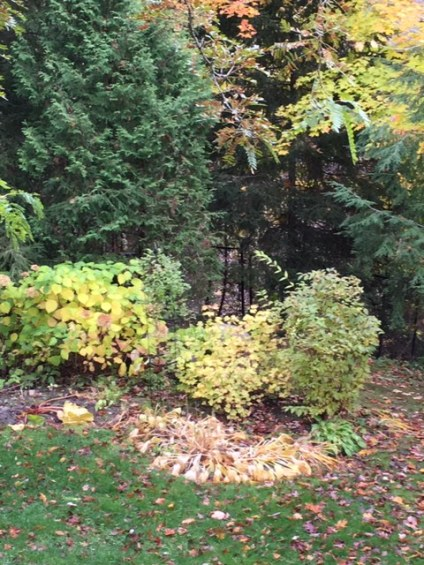 Blog Photo - autumn woods shrubs and trees