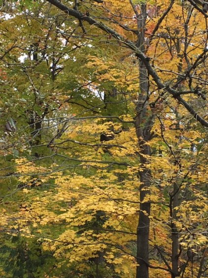 Blog Photo - autumn woods trees in the valley