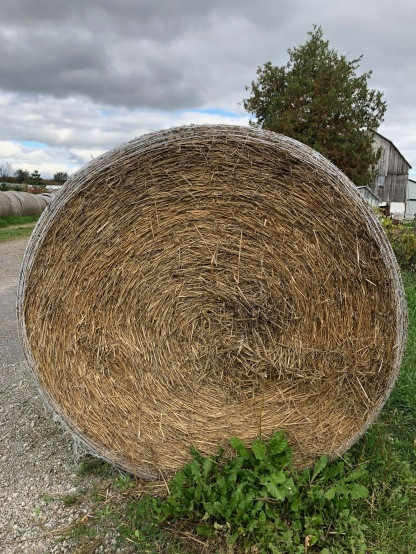 Blog Photo - Bowmanville Fall Drive -Hay CU.jpg