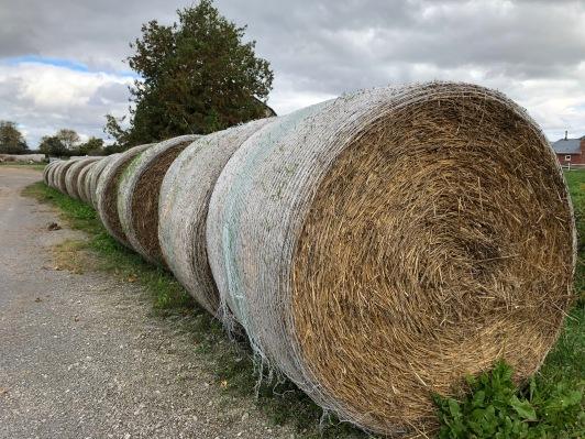 Blog Photo - Bowmanville Fall Drive - Hay