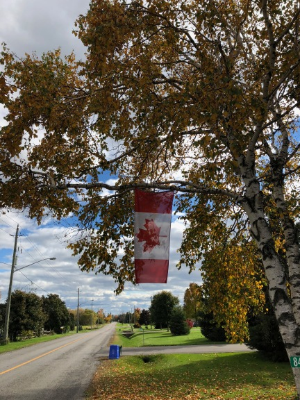 Blog Photo - Bowmanville Fall Drive Road and tree and Flag