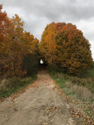 Blog Photo - Bowmanville Fall drive - road and trees