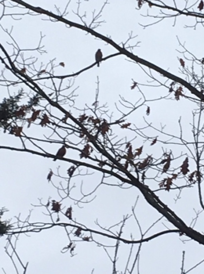 Blog Photo - Birds on Branches