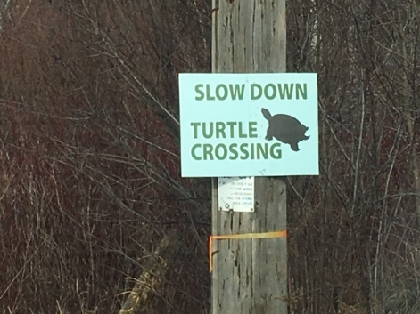 Blog Photo - Turtle Crossing