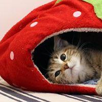 Blog Photo - Baby shower - Mayhew Cat