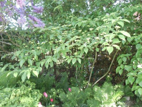 Mama's Garden Side shot with dogwood, ferns etc