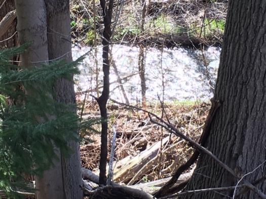 Blog Photo - Stream between trees