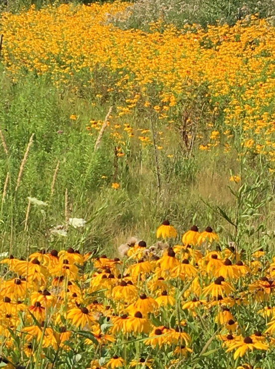 Blog Photo - Field and flowers