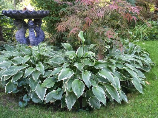Blog Photo - Late summer garden hosta and birdbath MCU