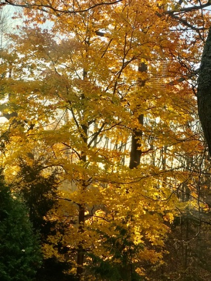 Blog Photo - Autumn - the golding - tree gold