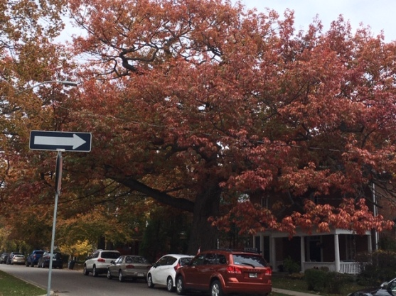 Blog Photo - Autumn - Tree sprawling across road