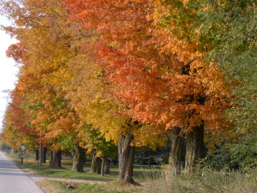 Blog Photo - Autumn Trees 1