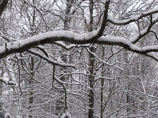 Blog Photo - Garden in Winter - Snowy branch