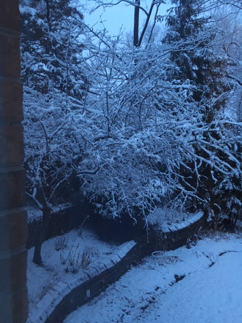 Blog Photo - Garden in Winter - snowy tree and walls