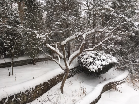 Blog Photo - Garden in winter - snowy walls and trees