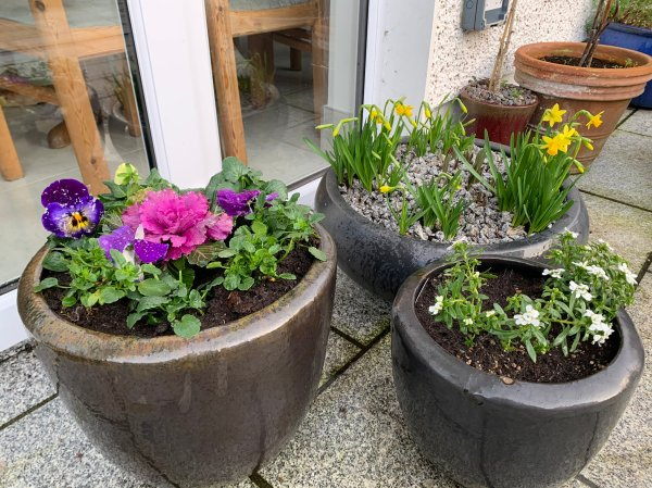 Blog Story - Ciaran Spring flowers in 3 pots