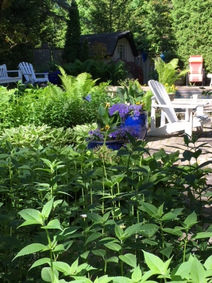 Blog Photo - Garden and pot and chair